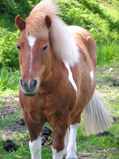 your-horses-are-at-home-in-western-prince-william-county