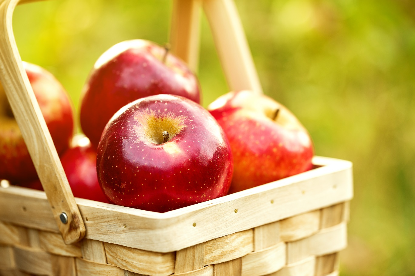 Best Apple-Picking Spots Near Northern Virginia